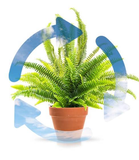Huoneilmaa puhdistavat kasvit